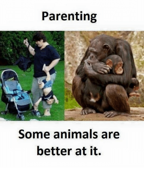 SIZZLE: Parenting  Some animals are  better at it.