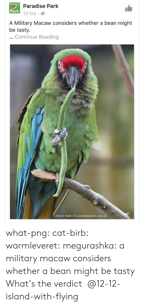 hales: Pargdise D  Paradise Park  12 hrs  Park  A Military Macaw considers whether a bean might  be tasty.  Continue Reading  Alison Hales paradisepark.org.uk what-png:  cat-birb: warmleveret:  megurashka: a military macaw considers whether a bean might be tasty What's the verdict    @12-12-island-with-flying