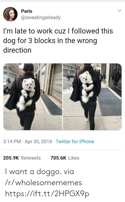 Late To Work: Paris  @sweatingalready  I'm late to work cuz I followed this  dog for 3 blocks in the wrong  direction  3:14 PM Apr 30, 2018 Twitter for iPhone  205.9K Retweets  705.6K Likes I want a doggo. via /r/wholesomememes https://ift.tt/2HPGX9p