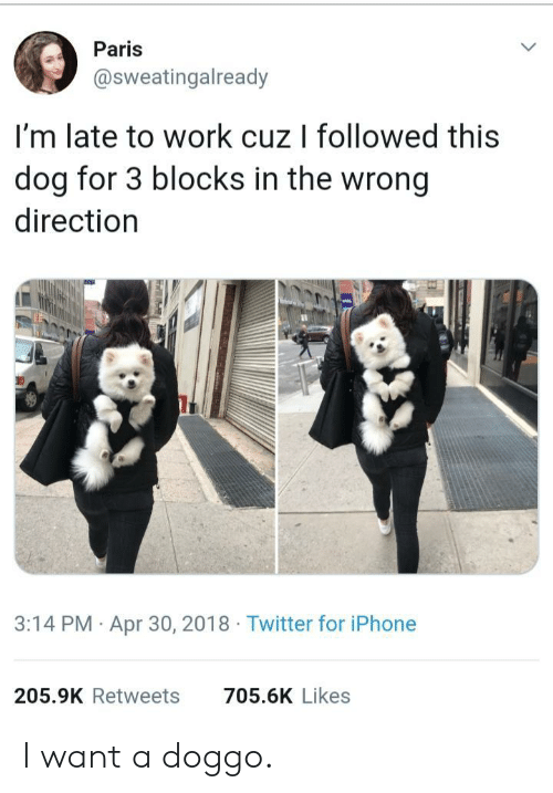 Late To Work: Paris  @sweatingalready  I'm late to work cuz I followed this  dog for 3 blocks in the wrong  direction  3:14 PM Apr 30, 2018 Twitter for iPhone  205.9K Retweets  705.6K Likes I want a doggo.