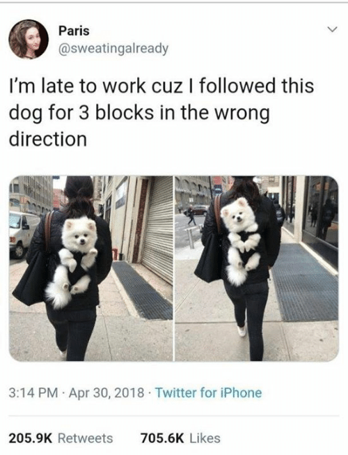 Late To Work: Paris  @sweatingalready  I'm late to work cuz I followed this  dog for 3 blocks in the wrong  direction  3:14 PM Apr 30, 2018 Twitter for iPhone  205.9K Retweets  705.6K Likes