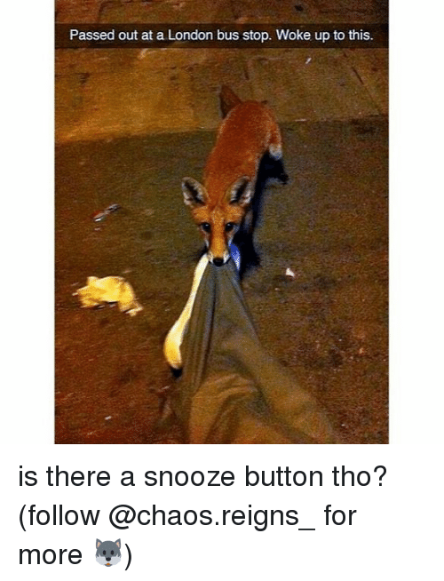 Memes, London, and 🤖: Passed out at a London bus stop. Woke up to this. is there a snooze button tho? (follow @chaos.reigns_ for more 🐺)