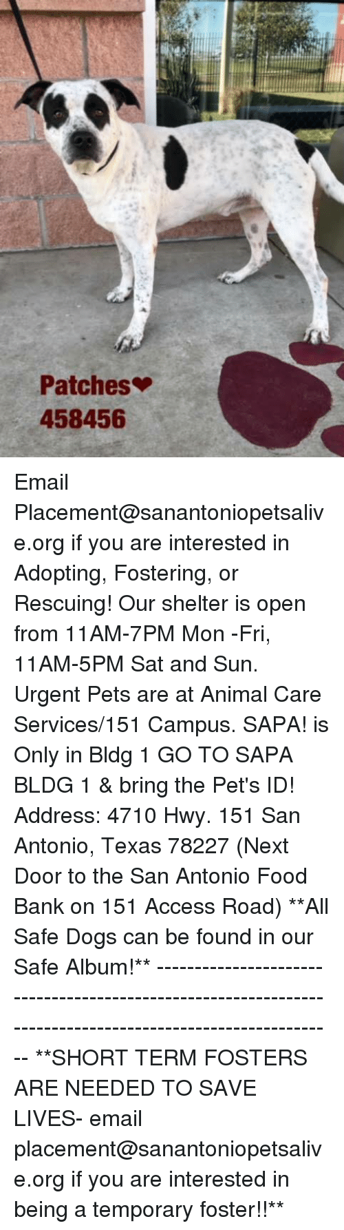 Dogs, Food, and Memes: Patches  458456 Email Placement@sanantoniopetsalive.org if you are interested in Adopting, Fostering, or Rescuing!  Our shelter is open from 11AM-7PM Mon -Fri, 11AM-5PM Sat and Sun.  Urgent Pets are at Animal Care Services/151 Campus. SAPA! is Only in Bldg 1 GO TO SAPA BLDG 1 & bring the Pet's ID! Address: 4710 Hwy. 151 San Antonio, Texas 78227 (Next Door to the San Antonio Food Bank on 151 Access Road)  **All Safe Dogs can be found in our Safe Album!** ---------------------------------------------------------------------------------------------------------- **SHORT TERM FOSTERS ARE NEEDED TO SAVE LIVES- email placement@sanantoniopetsalive.org if you are interested in being a temporary foster!!**