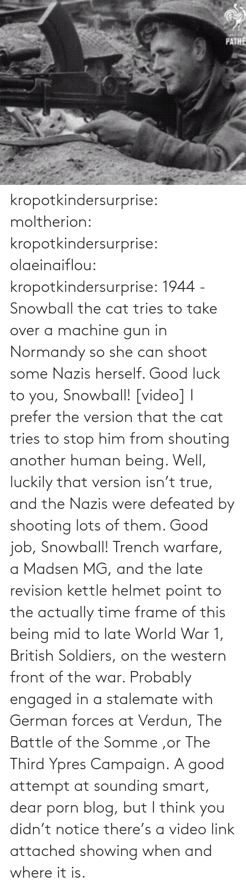 luckily: PATHE kropotkindersurprise: moltherion:  kropotkindersurprise:  olaeinaiflou:  kropotkindersurprise: 1944 - Snowball the cat tries to take over a machine gun in Normandy so she can shoot some Nazis herself. Good luck to you, Snowball! [video]  I prefer the version that the cat tries to stop him from shouting another human being.   Well, luckily that version isn't true, and the Nazis were defeated by shooting lots of them. Good job, Snowball!   Trench warfare, a Madsen MG, and the late revision kettle helmet point to the actually time frame of this being mid to late World War 1, British Soldiers, on the western front of the war. Probably engaged in a stalemate with German forces at Verdun, The Battle of the Somme ,or The Third Ypres Campaign.  A good attempt at sounding smart, dear porn blog, but I think you didn't notice there's a video link attached showing when and where it is.