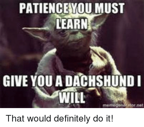 Memegen: PATIENCE YOU MUST  LEARN  GIVE YOU A DACHSHUND I  WILL  memegen Ator net That would definitely do it!
