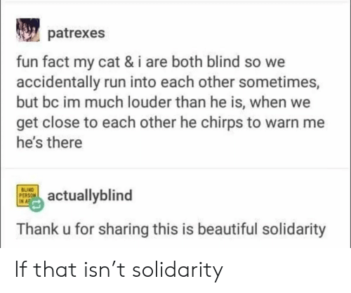 Louder: patrexes  fun fact my cat & i are both blind so we  accidentally run into each other sometimes,  but bc im much louder than he is, when we  get close to each other he chirps to warn me  he's there  BUIND  PERSON  IN A  actuallyblind  Thank u for sharing this is beautiful solidarity If that isn't solidarity