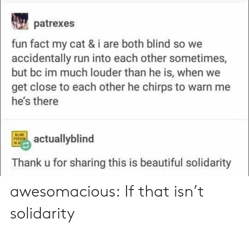 Louder: patrexes  fun fact my cat & i are both blind so we  accidentally run into each other sometimes,  but bc im much louder than he is, when we  get close to each other he chirps to warn me  he's there  BUIND  PERSON  IN A  actuallyblind  Thank u for sharing this is beautiful solidarity awesomacious:  If that isn't solidarity