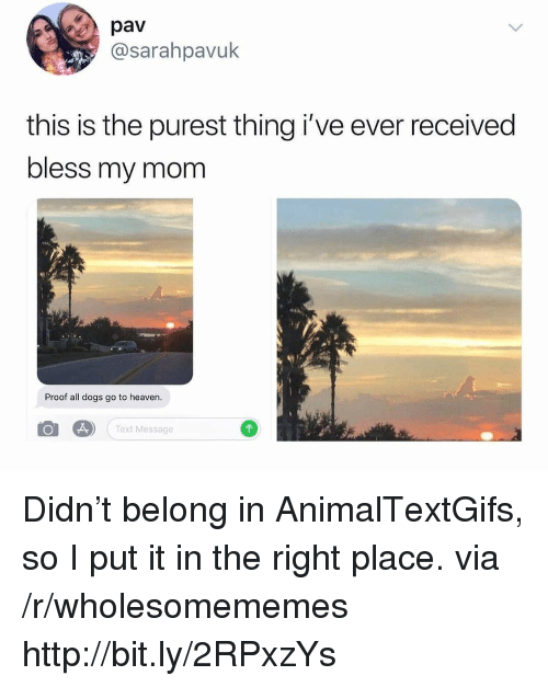 Right Place: pav  @sarahpavuk  this is the purest thing i've ever received  bless my mom  Proof all dogs go to heaven.  Text Message Didn't belong in AnimalTextGifs, so I put it in the right place. via /r/wholesomememes http://bit.ly/2RPxzYs