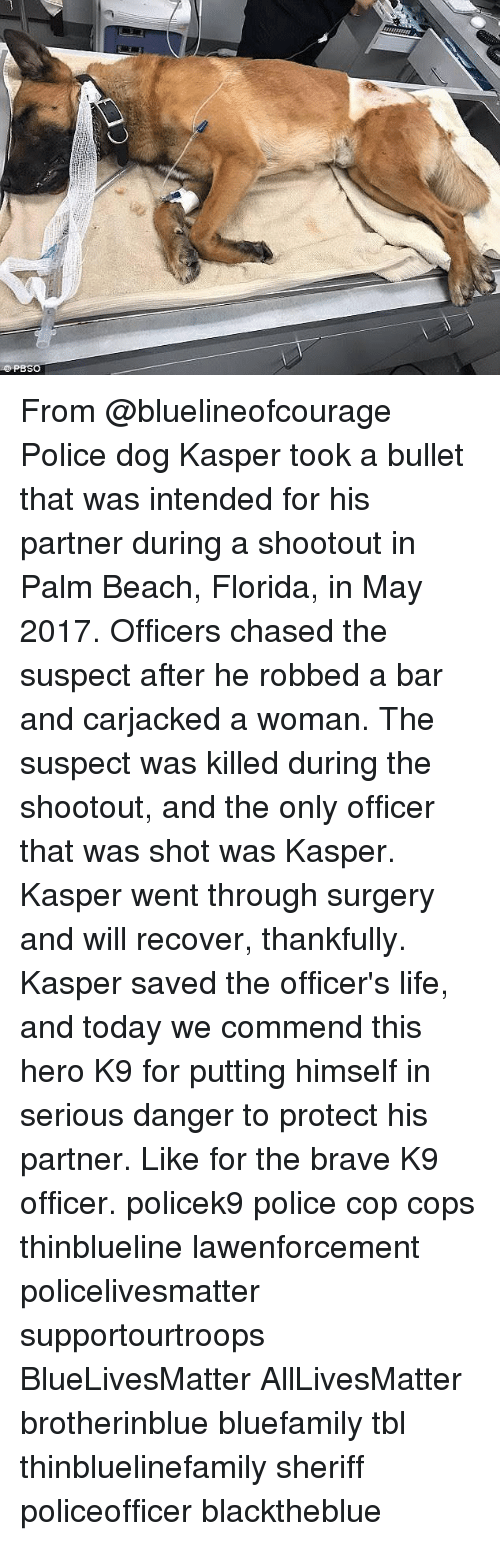 All Lives Matter, Dogs, and Life: PBSO From @bluelineofcourage Police dog Kasper took a bullet that was intended for his partner during a shootout in Palm Beach, Florida, in May 2017. Officers chased the suspect after he robbed a bar and carjacked a woman. The suspect was killed during the shootout, and the only officer that was shot was Kasper. Kasper went through surgery and will recover, thankfully. Kasper saved the officer's life, and today we commend this hero K9 for putting himself in serious danger to protect his partner. Like for the brave K9 officer. policek9 police cop cops thinblueline lawenforcement policelivesmatter supportourtroops BlueLivesMatter AllLivesMatter brotherinblue bluefamily tbl thinbluelinefamily sheriff policeofficer blacktheblue