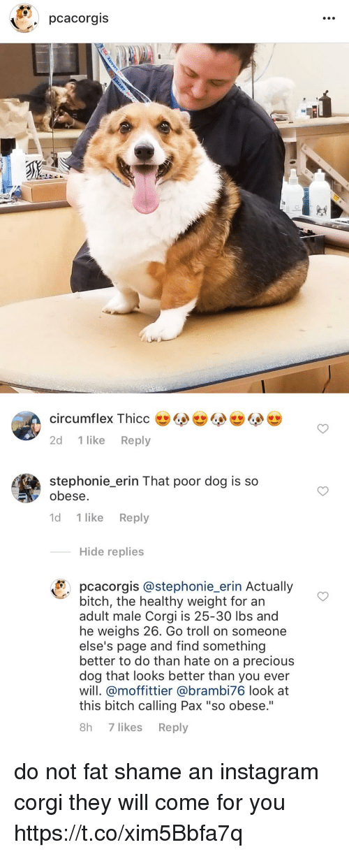 "Bitch, Corgi, and Instagram: pcacorgis   2d 1 like Reply  stephonie erin That poor dog is so  obese.  1d 1 like Reply  Hide replies  pcacorgis @stephonie_erin Actually  bitch, the healthy weight for an  adult male Corgi is 25-30 lbs and  he weighs 26. Go troll on someone  else's page and find something  better to do than hate on a precious  dog that looks better than you ever  will. @moffittier @brambi76 look at  this bitch calling Pax ""so obese.""  8h 7 likes Reply do not fat shame an instagram corgi they will come for you https://t.co/xim5Bbfa7q"