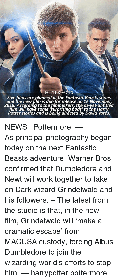 Otterly: PCTTERFACTS  Five films are planned in the Fantastic Beasts series  and the new film is due for release on 16 November,  2018. According to the filmmakers, the as-yet-untitled  lm will have some surprising nods' to the Harry  otter stories and is being directed by David Yates. NEWS | Pottermore ⠀⠀⠀⠀⠀⠀⠀⠀⠀⠀⠀⠀ — As principal photography began today on the next Fantastic Beasts adventure, Warner Bros. confirmed that Dumbledore and Newt will work together to take on Dark wizard Grindelwald and his followers. – The latest from the studio is that, in the new film, Grindelwald will 'make a dramatic escape' from MACUSA custody, forcing Albus Dumbledore to join the wizarding world's efforts to stop him. — harrypotter pottermore