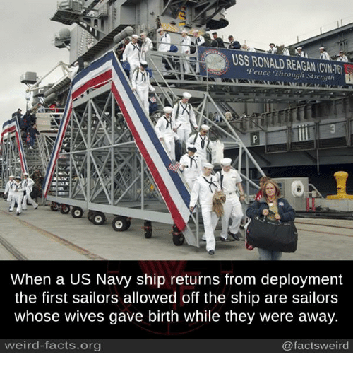 Memes, 🤖, and Org: Peace Through CINT  Strength  When a US Navy ship returns from deployment  the first sailors allowed off the ship are sailors  Whose Wives gave birth While they Were away.  weird-facts.org  @facts weird