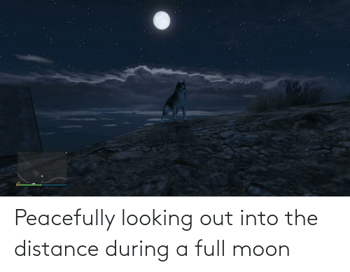 Distance: Peacefully looking out into the distance during a full moon