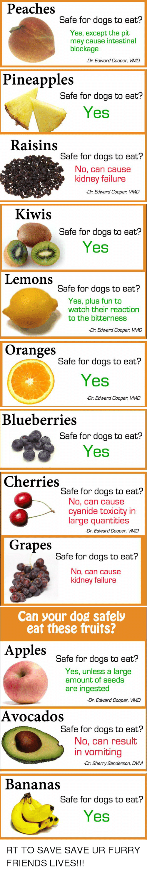 Can A Dog Safely Eat Blueberries