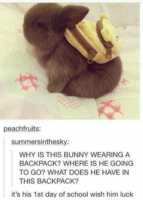 School, What Does, and Luck: peachfruits:  summersinthesky:  WHY IS THIS BUNNY WEARING A  BACKPACK? WHERE IS HE GOING  TO GO? WHAT DOES HE HAVE IN  THIS BACKPACK?  it's his 1st day of school wish him luck