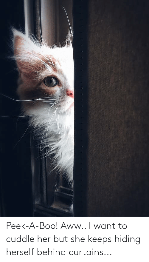Curtains: Peek-A-Boo! Aww.. I want to cuddle her but she keeps hiding herself behind curtains...