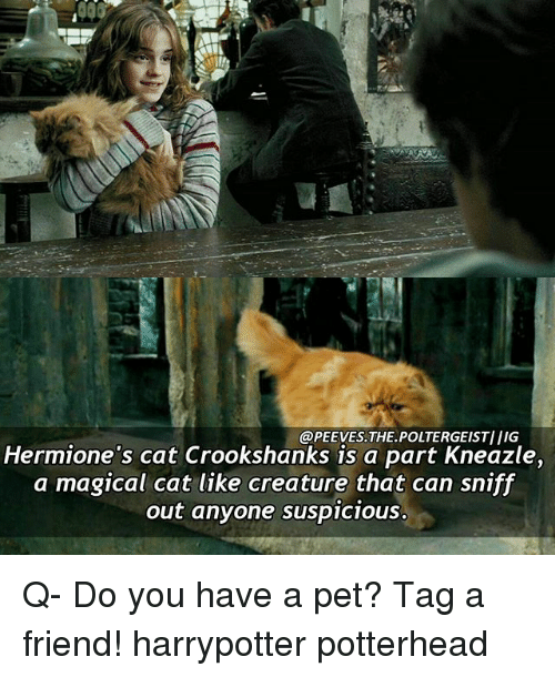 Suspicious: @PEEVES THE POLTERGEISTIIIG  Hermione's cat Crookshanks is a part Kneazle,  a magical cat like creature that can sniff  out anyone suspicious. Q- Do you have a pet? Tag a friend! harrypotter potterhead