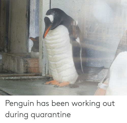 Penguin: Penguin has been working out during quarantine