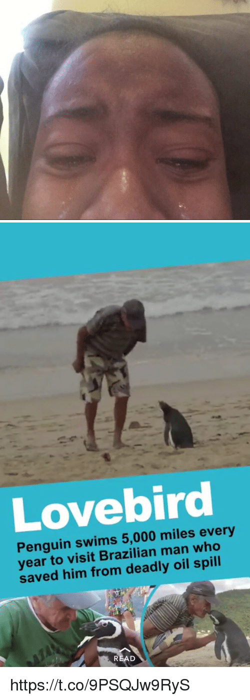 oil spill: Penguin swims 5,000 miles every  year to visit Brazilian man who  saved him from deadly oil spill https://t.co/9PSQJw9RyS
