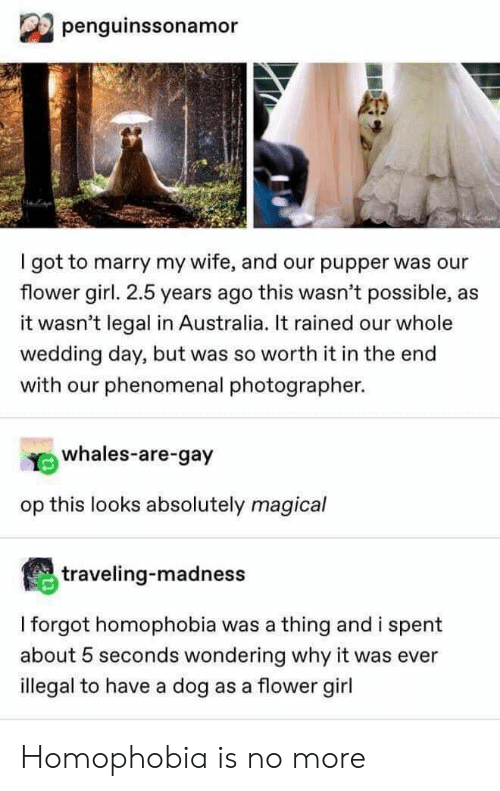 pupper: penguinssonamor  got to marry my wife, and our pupper was our  flower girl. 2.5 years ago this wasn't possible, as  it wasn't legal in Australia. It rained our whole  wedding day, but was so worth it in the end  with our phenomenal photographer.  whales-are-gay  op this looks absolutely magical  traveling-madness  I forgot homophobia was a thing and i spent  about 5 seconds wondering why it was ever  illegal to have a dog as a flower girl Homophobia is no more