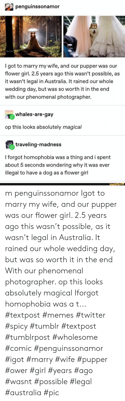 pupper: penguinssonamor  got to marry my wife, and our pupper was our  flower girl. 2.5 years ago this wasn't possible, as  it wasn't legal in Australia. It rained our whole  wedding day, but was so worth it in the end  with our phenomenal photographer.  whales-are-gay  op this looks absolutely magical  traveling-madness  I forgot homophobia was a thing and i spent  about 5 seconds wondering why it was ever  illegal to have a dog as a flower girl  ifunny.co m penguinssonamor Igot to marry my wife, and our pupper was our flower girl. 2.5 years ago this wasn't possible, as it wasn't legal in Australia. It rained our whole wedding day, but was so worth it in the end With our phenomenal photographer. op this looks absolutely magical Iforgot homophobia was a t... #textpost #memes #twitter #spicy #tumblr #textpost #tumblrpost #wholesome #comic #penguinssonamor #igot #marry #wife #pupper #ower #girl #years #ago #wasnt #possible #legal #australia #pic
