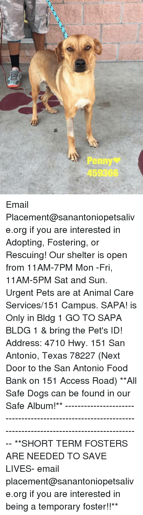 Dogs, Food, and Memes: Penny  458366 Email Placement@sanantoniopetsalive.org if you are interested in Adopting, Fostering, or Rescuing!  Our shelter is open from 11AM-7PM Mon -Fri, 11AM-5PM Sat and Sun.  Urgent Pets are at Animal Care Services/151 Campus. SAPA! is Only in Bldg 1 GO TO SAPA BLDG 1 & bring the Pet's ID! Address: 4710 Hwy. 151 San Antonio, Texas 78227 (Next Door to the San Antonio Food Bank on 151 Access Road)  **All Safe Dogs can be found in our Safe Album!** ---------------------------------------------------------------------------------------------------------- **SHORT TERM FOSTERS ARE NEEDED TO SAVE LIVES- email placement@sanantoniopetsalive.org if you are interested in being a temporary foster!!**