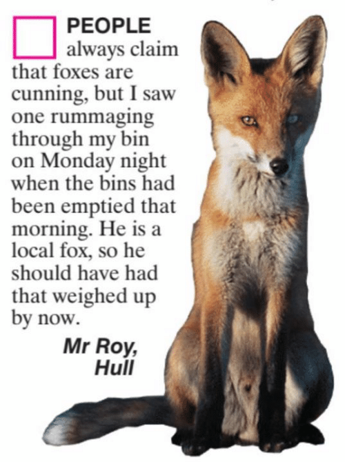 hull: PEOPLE  always claim  that foxes are  cunning, but I saw  one rummaging  through my bin  on Monday night  when the bins had  been emptied that  morning. He is a  local fox, so he  should have had  that weighed up  by now  Mr Roy,  Hull