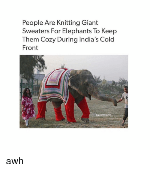 Knitting Jumpers For Elephants Fake : People are knitting giant sweaters for elephants to keep