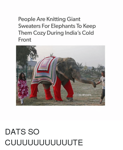 Ironic, Giant, and Giants: People Are Knitting Giant  Sweaters For Elephants To Keep  Them Cozy During India's Cold  Front  IG: @notable DATS SO CUUUUUUUUUUUTE