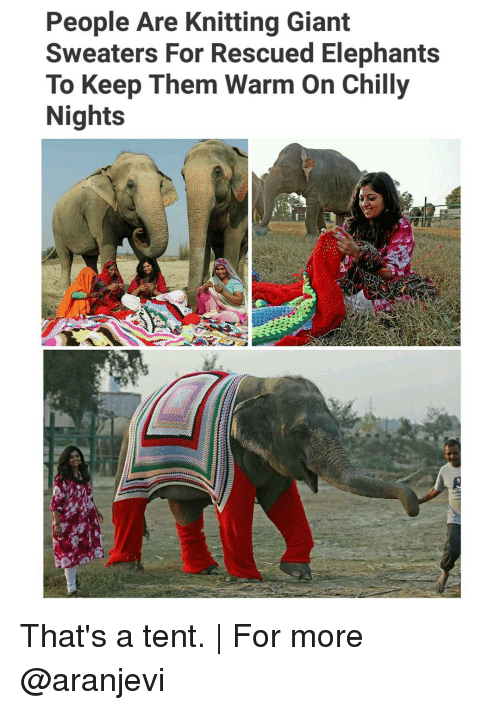 Memes, Chillis, and Elephant: People Are Knitting Giant  Sweaters For Rescued Elephants  To Keep Them Warm on Chilly  Nights That's a tent. | For more @aranjevi