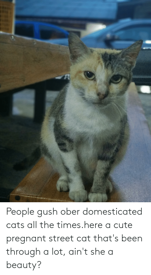 Been Through A Lot: People gush ober domesticated cats all the times.here a cute pregnant street cat that's been through a lot, ain't she a beauty?