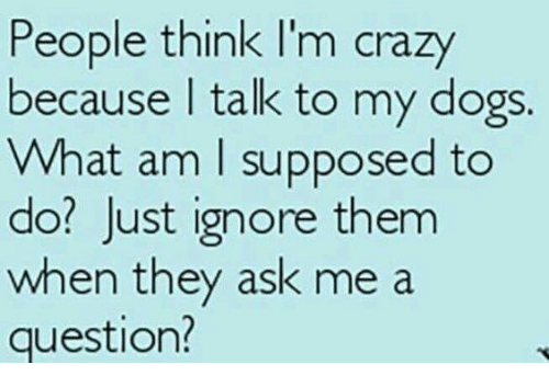 people think im crazy: People think I'm crazy  because I talk to my dogs.  What am I supposed to  do? Just ignore them  when they ask me a  question?