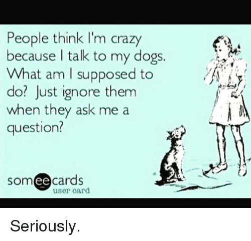 people think im crazy: People think I'm crazy  because I talk to my dogs.  What am I supposed to  do? Just ignore them  when they ask me a  question?  someecards  user card Seriously.