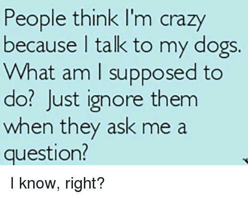 people think im crazy: People think I'm crazy  because talk to my dogs.  What am I supposed to  do? Just ignore them  when they ask me a  question? I know, right?