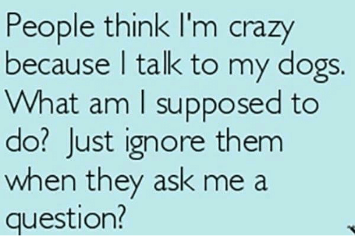people think im crazy: People think I'm crazy  because talk to my dogs  What am I supposed to  do? Just ignore them  when they ask me a  question?