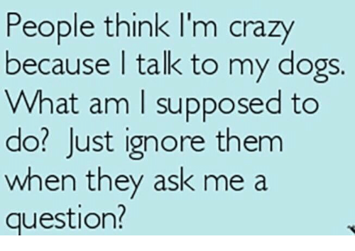 think-im-crazy: People think I'm crazy  because talk to my dogs.  What am I supposed to  do? Just ignore them  when they ask me a  question?