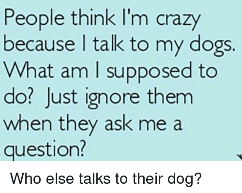 think-im-crazy: People think I'm crazy  because talk to my dogs.  What am I supposed to  do? Just ignore them  when they ask me a  question? Who else talks to their dog?