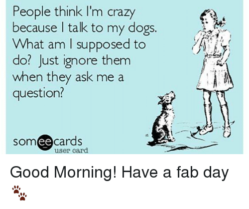 people think im crazy: People think I'm crazy  because talk to my dogs.  What am supposed to  do? Just ignore them  when they ask me a  question?  somee cards  user card. Good Morning! Have a fab day 🐾