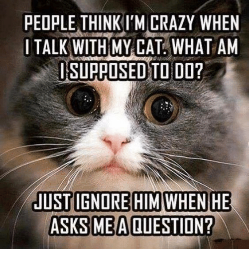 people think im crazy: PEOPLE THINK I'M CRAZY WHEN  I TALK WITH MY CAT, WHAT AM  ISUPAOSED TO DO?  ASKS MEAQUESTION?