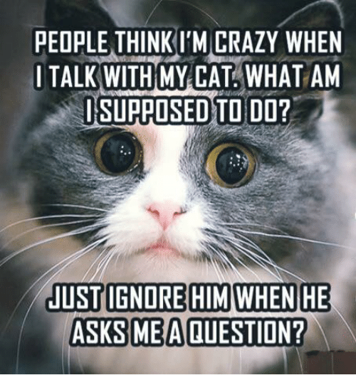 people think im crazy: PEOPLE THINK I'M CRAZY WHEN  I TALK WITH MY CAT WHAT AM  I SUPPOSED TO DO?  JUST IGNORE HIM WHEN HE  ASKS ME A QUESTION?