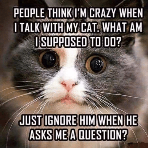 people think im crazy: PEOPLE THINK I'M CRAZY WHEN  OTALK WITH MY CAT. WHAT AM  ISUPPOSED TO DO?  JUST IGNORE HIM WHEN HE  ASKS ME A QUESTION?