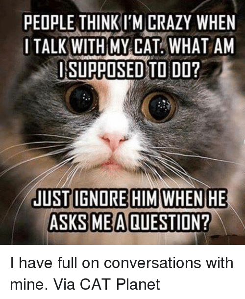 Memes, Asks, and 🤖: PEOPLE THINK l'MCRAZY WHEN  I TALK WITH MY CAT WHAT AM  I SUPPOSED TO DO?  JUST IGNORE HIM WHEN HE  ASKS ME A QUESTION? I have full on conversations with mine. Via CAT Planet