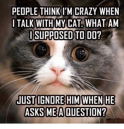 people-thinkim-crazy-when-i-talk-with-my-cat-what-6149160.png