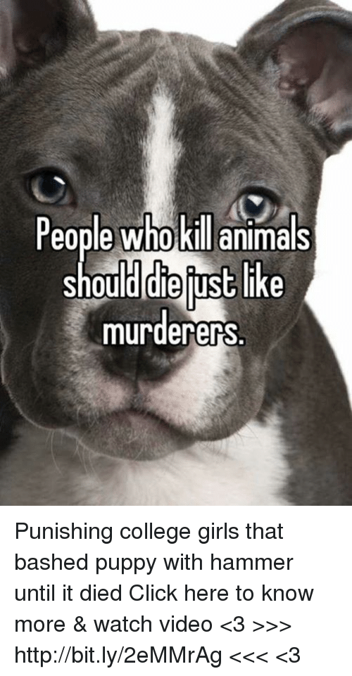 Animals, Click, and College: People who kill animals  should die ust like  murderers. Punishing college girls that bashed puppy with hammer until it died  Click here to know more & watch video  <3 >>> http://bit.ly/2eMMrAg <<< <3