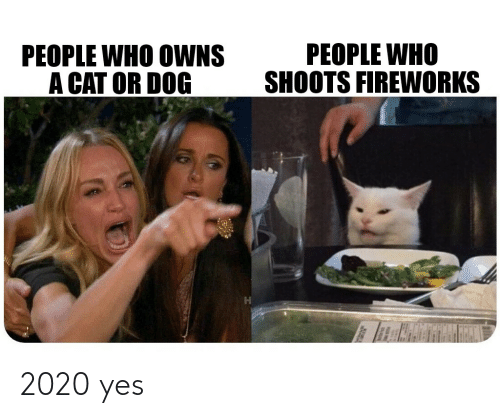 cat-or-dog: PEOPLE WHO  SHOOTS FIREWORKS  PEOPLE WHO OWNS  A CAT OR DOG 2020 yes