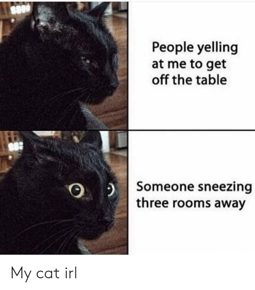 sneezing: People yelling  at me to get  off the table  Someone sneezing  three rooms away My cat irl