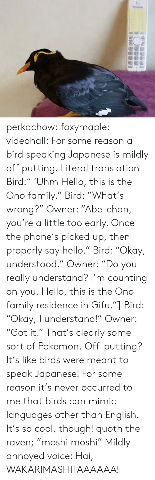 """the raven: perkachow:  foxymaple:  videohall:  For some reason a bird speaking Japanese is mildly off putting.     Literal translation Bird:"""" 'Uhm Hello, this is the Ono family."""" Bird: """"What's wrong?"""" Owner: """"Abe-chan, you're a little too early. Once the phone's picked up, then properly say hello."""" Bird: """"Okay, understood."""" Owner: """"Do you really understand? I'm counting on you. Hello, this is the Ono family residence in Gifu.""""] Bird: """"Okay, I understand!"""" Owner: """"Got it.""""  That's clearly some sort of Pokemon.  Off-putting? It's like birds were meant to speak Japanese!  For some reason it's never occurred to me that birds can mimic languages other than English. It's so cool, though!     quoth the raven;""""moshi moshi""""  Mildly annoyed voice: Hai, WAKARIMASHITAAAAAA!"""