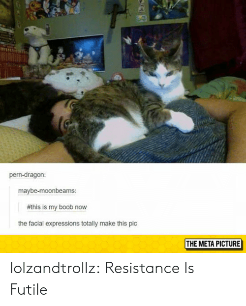 Expressions: pern-dragon:  maybe-moonbeams:  #this is my boob now  the facial expressions totally make this pic  THE META PICTURE lolzandtrollz:  Resistance Is Futile