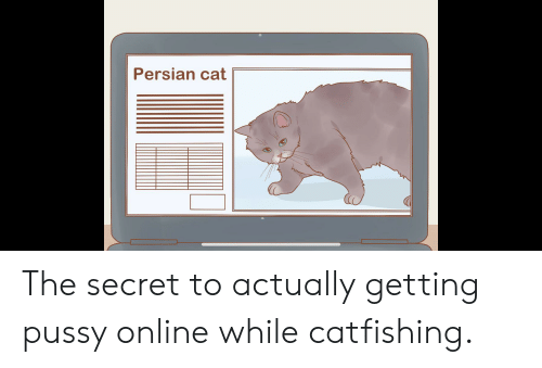 persian cat: Persian cat The secret to actually getting pussy online while catfishing.