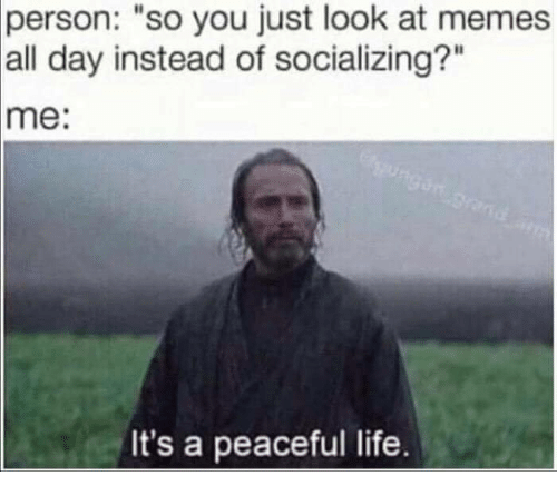 "Life, Memes, and 🤖: person:  ""so you just look at memes  all day instead of socializing?""  me:  It's a peaceful life."